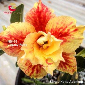 Enxerto de uma cor com flor dobrada - NS172 (Legacy Rose) - Importada