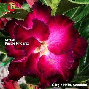 Enxerto de uma cor com flor dobrada - NS155 (Purple Phoenix) - Importada