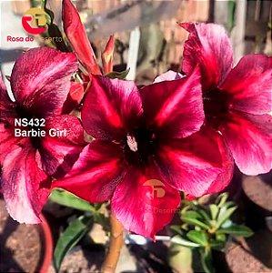 Enxerto de uma cor com flor simples - NS432 (Barbie Girl) - Importada
