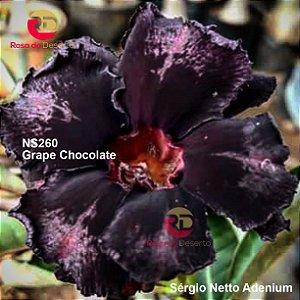 Enxerto de uma cor com flor dobrada - NS260 (Grape Chocolate) - Importada
