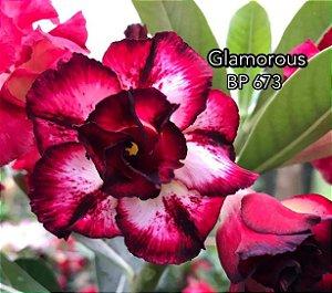 Enxerto de uma cor com flor dobrada BP 673 (Glamorous) - Importada