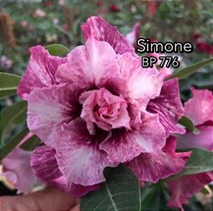 Enxerto de uma cor com flor tripla BP 776 (Simone) - Importada