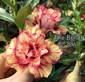 Enxerto de uma cor com flor tripla BP 886 (The Bell II) - Importada