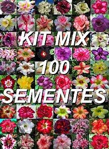 Kit com 100 sementes de cores de flor simples da Rosa do Deserto