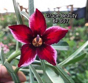 Enxerto de uma cor com flor simples BP 697 Grape Beauty - Importada