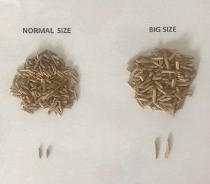 BIG SIZE - Kit com 1000 sementes de flor simples na cor rosa para produção de cavalos para enxertia