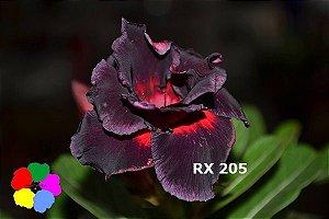 Enxerto de uma cor com flor Dobrada - RX205