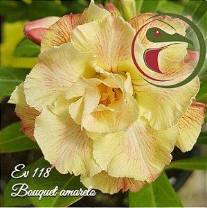 Muda Rosa do Deserto de enxerto com flor dobrada bouquet na cor Amarela Matizada - EV118