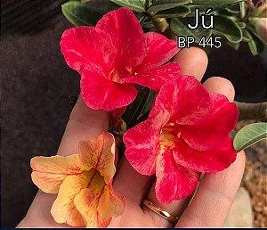 Enxerto de uma cor com flor Simples BP 445 (JÚ) - Importada