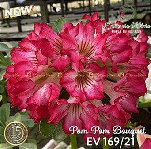 Muda Rosa do Deserto de enxerto com flor simples na cor rosa - EV169/21 Pom Pom Bouquet