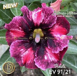 Muda Rosa do Deserto de enxerto com flor simples na cor Roxa Matizada - EV91/21 Heidi