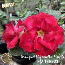Muda Rosa do Deserto de enxerto com flor tripla Bouquet na cor Vermelha - EV178/21 Bouquet Vermelha Tripla