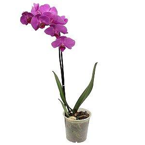 Vaso Pote Plástico Transparente Para Orquídeas  - 0,3 Litros