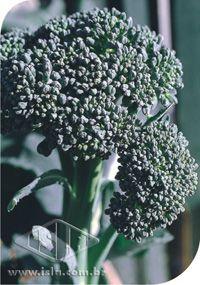 Sementes Couve-Brócoli Piracicaba Precoce - Envelope 100gr