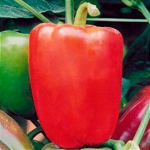 Sementes Pimentão Vermelho Tecnoseed - Envelope 5gr