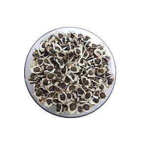 Sementes de Moringa Oleifera - 100 gramas