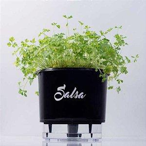 Vaso Auto Irrigável Linha Gourmet Salsa N03 – Médio 16x14