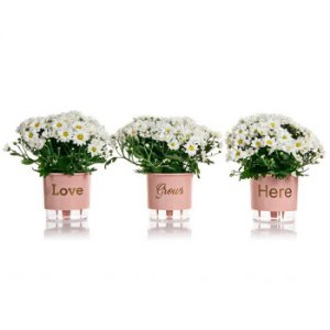 3 Vasos Auto Irrigáveis Love Grows Here N02 Rosa Quartzo – Pequeno 12x11