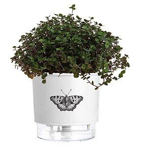 Vaso Autoirrigável Pequeno N02 12cm x 11cm Branco BORBOLETA