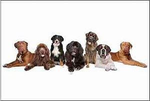 Cachorro 09