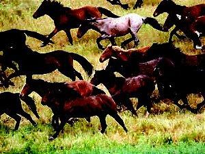 Cavalos 02