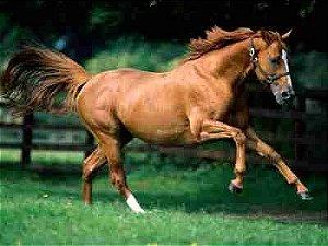 Cavalos 04