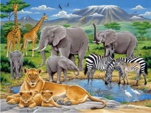 Floresta Safari 03