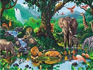 Floresta Safari 08