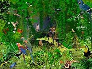 Floresta Safari 13