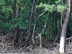 Floresta sem animais 02