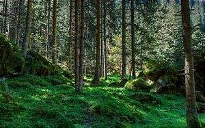 Floresta sem animais 09