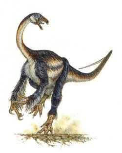 Dinossauros 09 - Display