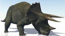 Dinossauros 10 - Display