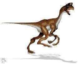 Dinossauros 12 - Display
