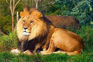 Leão 12