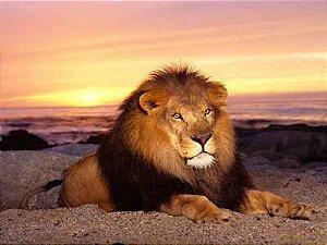 Leão 13
