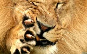 Leão 16