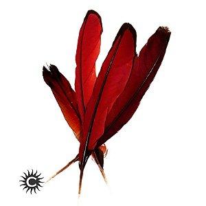 Pena - Ekodidé Vermelha