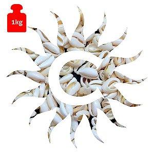 Buzio - Branco - Aberto - 1 Kilo