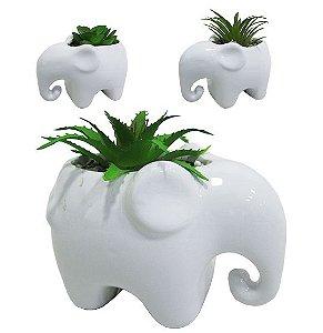 Cachepot de Porcelana Elefante com Suculenta Sortidas - Unidade