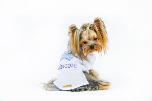 PRÍNCIPE (PET)