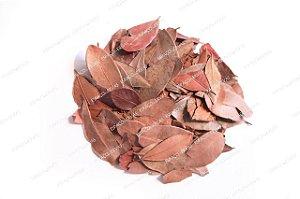 Chá de Pedra Ume Kaa - Insulina Vegetal 30g