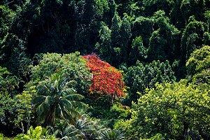 Costa Verde III (Papel Fotográfico)