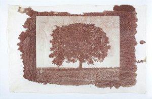 Árvore Van Dyke IV - Silvana Tinelli