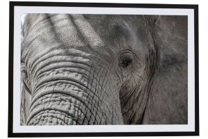 Elefante África I - Silvana Tinelli
