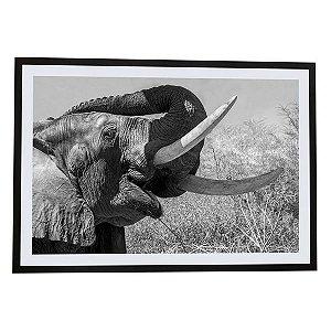 Quadro moldura de madeira Elefante África II - Silvana Tinelli