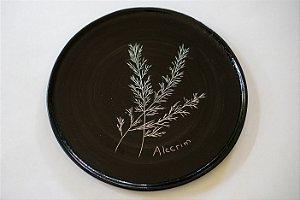 Plantas da sorte - Silvana Tinelli