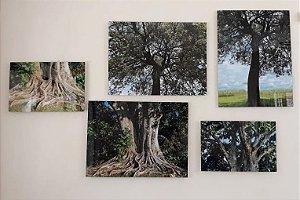 Conjunto de quadros Metacrilato Árvores - Silvana Tinelli