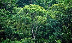 Costa Verde (Metacrilato) - Silvana Tinelli