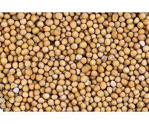 Mostarda em Grãos (semente ) 1 Kg